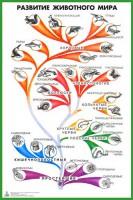 Таблица «Развитие животного мира» для оформления кабинета биологии - Интернет-магазин школьного и спортивного оборудования Квазар, Екатеринбург