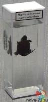 """Влажный препарат """"Черепаха болотная"""" - Интернет-магазин школьного и спортивного оборудования Квазар, Екатеринбург"""